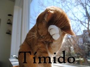 5_timido