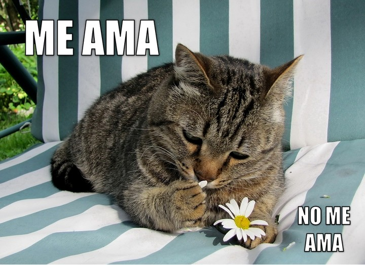miaucoles_me_ama_no_me_ama