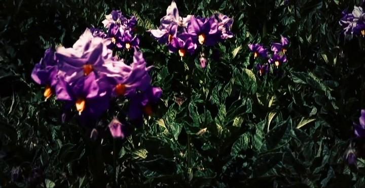 luzmila_carpio_-_miski_takiy_flores