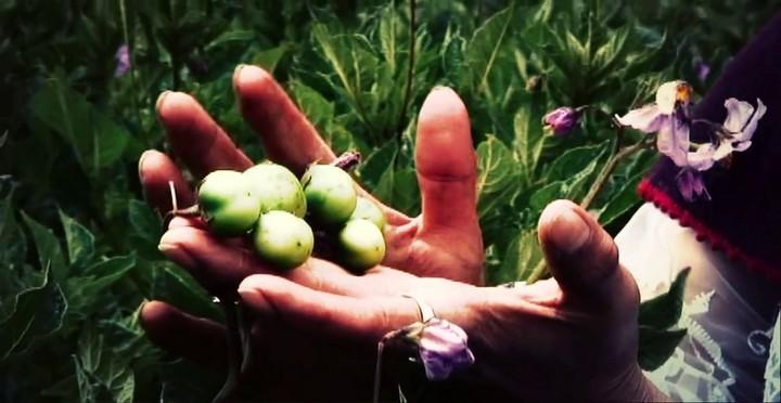 luzmila_carpio_-_miski_takiy_frutas