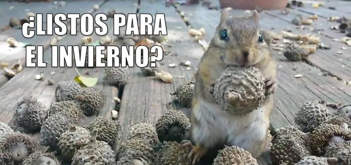 miaucoles_listos_para_el_invierno_ardillas_rayadas