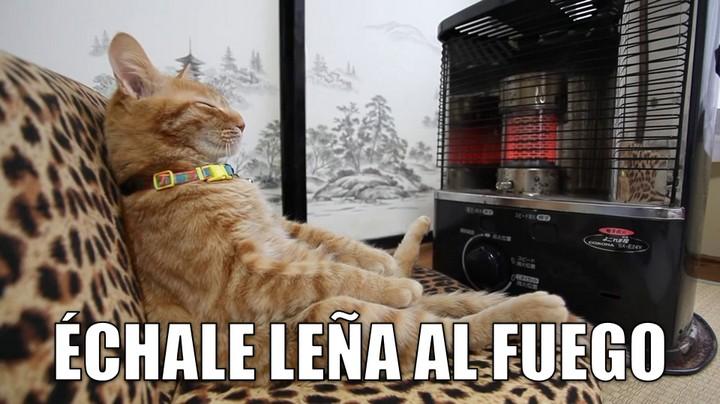miaucoles_echale_lena_al_fuego