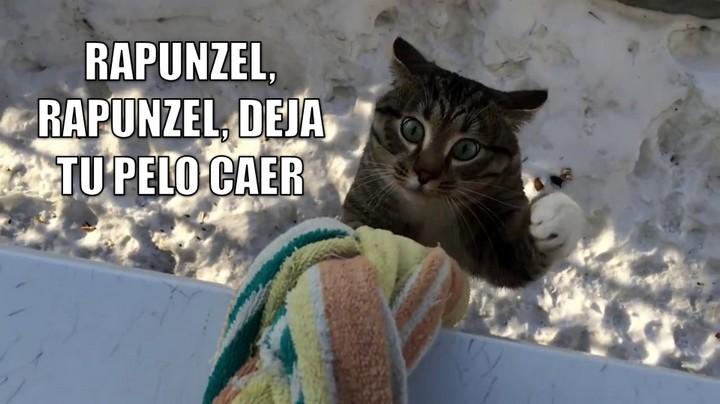 miaucoles_rapunzel_rapunzel_deja_tu_pelo_caer_720