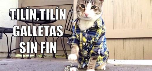 miaucoles_tilin_tilin_galletas_sin_fin-f