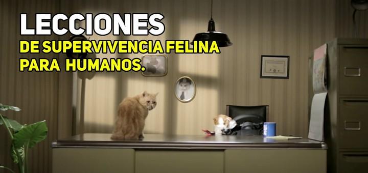 lecciones_de_supervivencia_felina_para_humanos-f