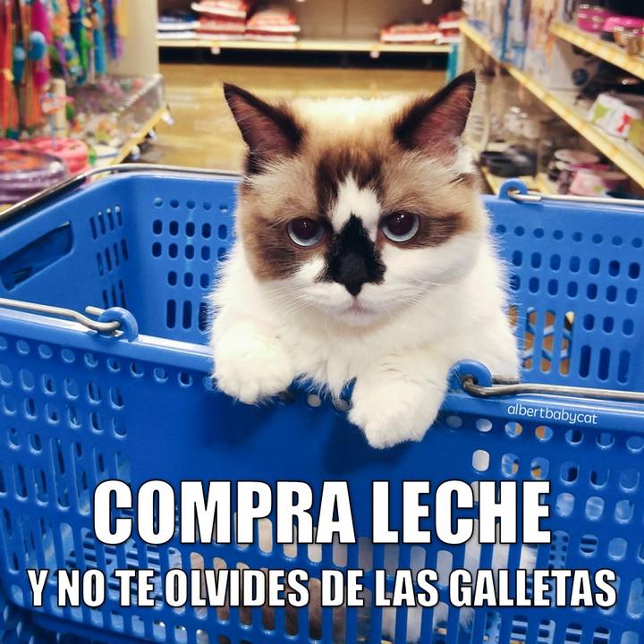 miaucoles_compra_leche