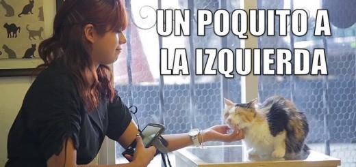 miaucoles_un_poquito_a_la_izquierda_720