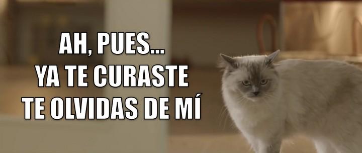 miaucoles_ah_pues_ya_te_curaste_te_olvidas_de_mi_720
