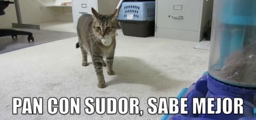 miaucoles_pan_con_sudor_sabe_mejor-f