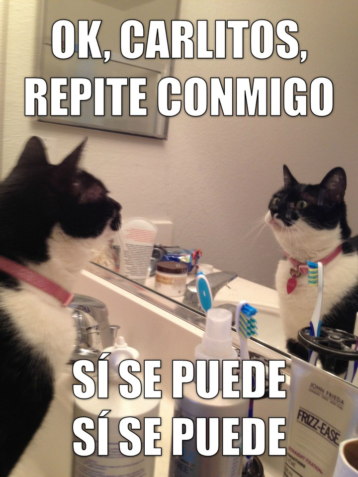 miaucoles_ok_carlitos_repite_conmigo_si_se_puede_720