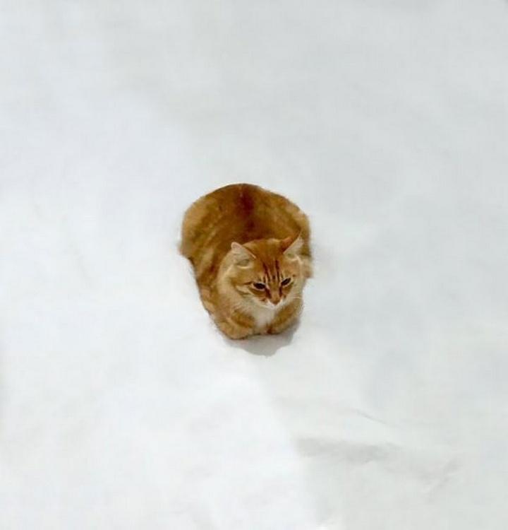 ¿Qué está haciendo este gato?