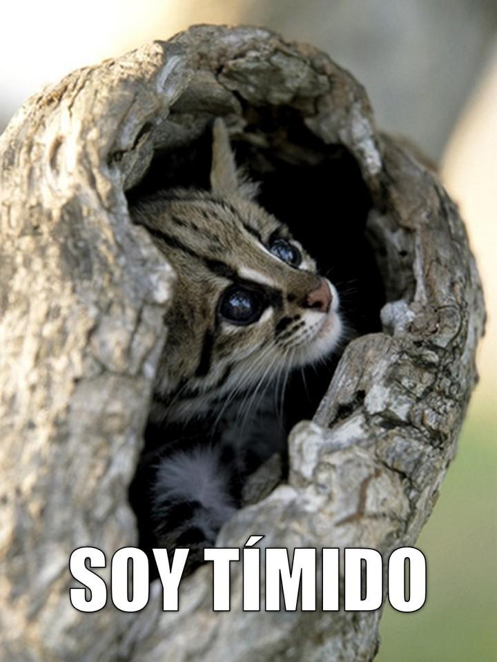 ocelote_soy_timido_720