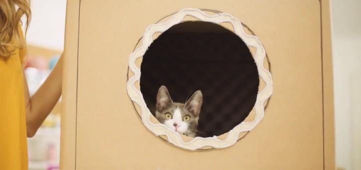 Casetas creativas para gatos