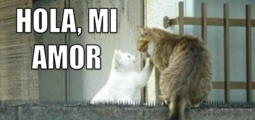 miaucoles_todo_por_amor-f