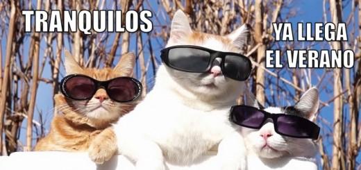 miaucoles_tranquilos_ya_llega_el_verano-f