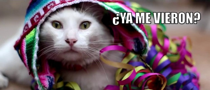 miaucoles_senor_cabezon_ya_me_vieron