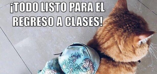 miaucoles_todo_listo_para_el_regreso_a_clases-f
