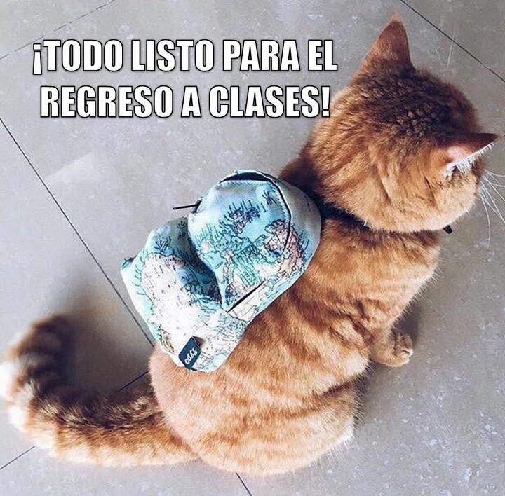 miaucoles_todo_listo_para_el_regreso_a_clases_720