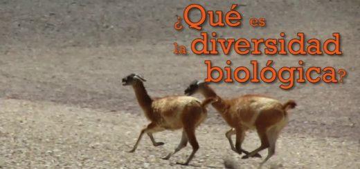 dia_de_la_diversidad_biologica-f