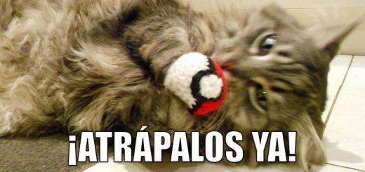 miaucoles_atrapalos_ya_pokemon-f