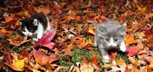 Miáucoles: ¿Ya llegó el otoño?