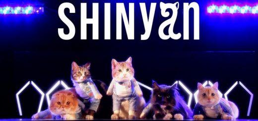 SHINyan, grupo de K-Pop formado por gatos