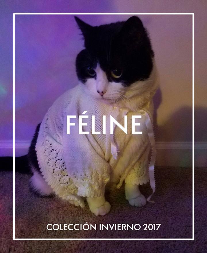 Miáucoles: FÉLINE: Colección invierno 2017