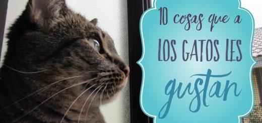 10 cosas que a los gatos les gustan