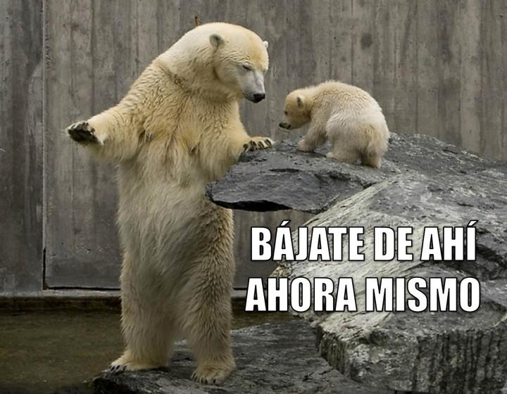 Graci-oso: Bájate de ahí ahora mismo