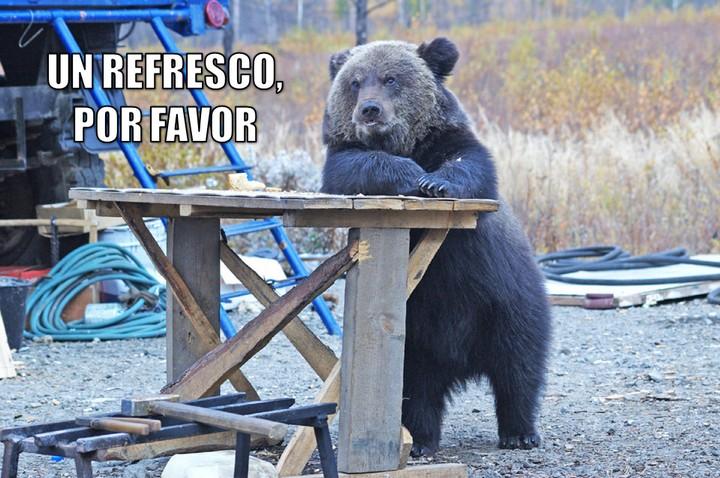 Graci-oso: Un refresco, por favor
