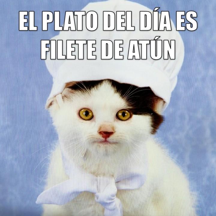 Miáucoles: El plato del día es filete de atún