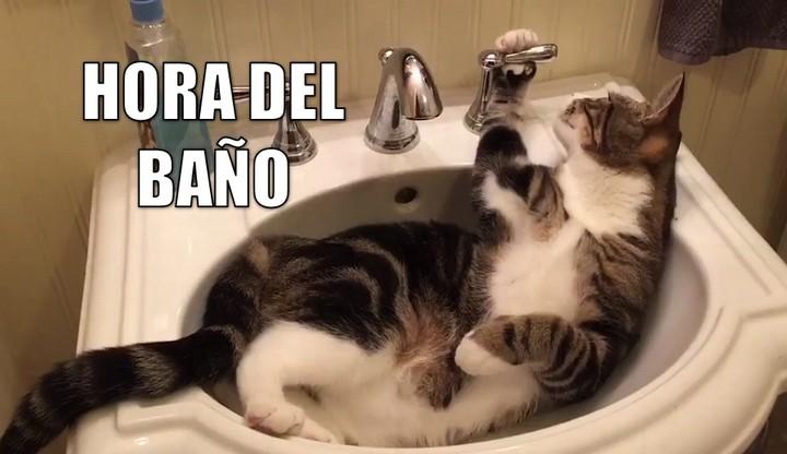 Miáucoles: Hora del baño