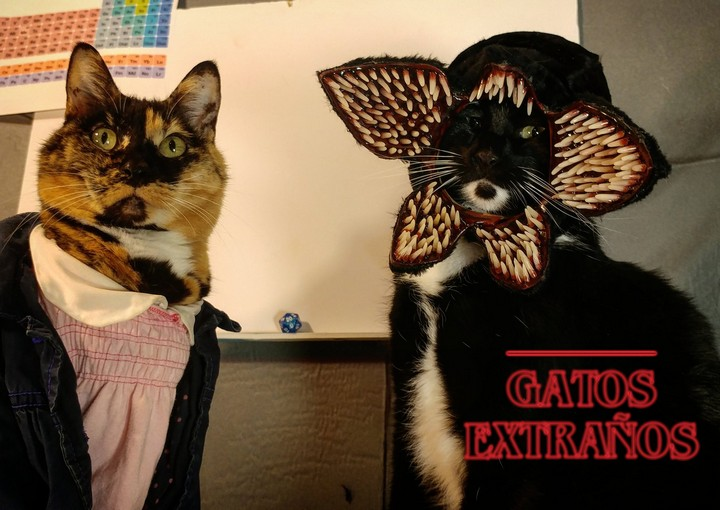 Gatos extraños