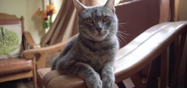 Emilio Da Cat