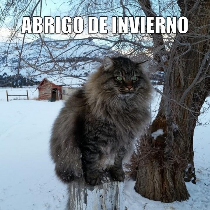 Miáucoles: Abrigo de invierno