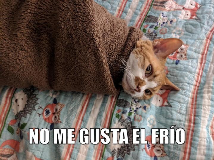 Miáucoles: No me gusta el frío