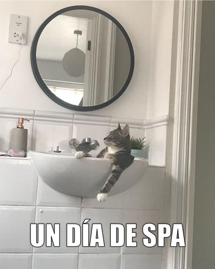 Miáucoles: Un día de spa