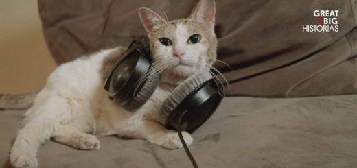 David Teie, compositor de música para gatos