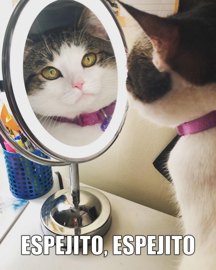 Miáucoles: Espejito, espejito