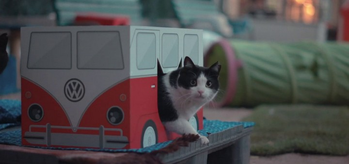 miaucoles camper cat