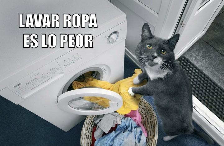 Miáucoles: Lavar ropa es lo peor
