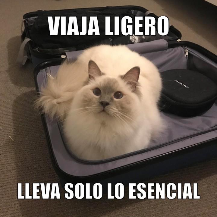 Miaúcoles: Viaja ligero, lleva solo lo esencial