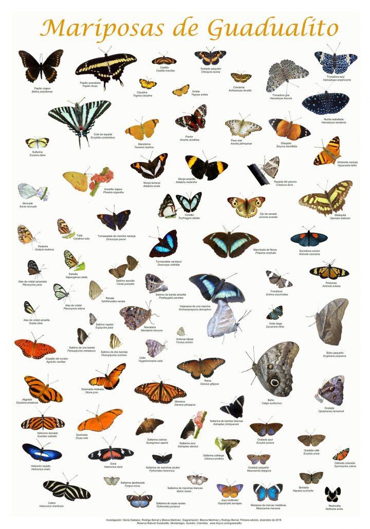 Afiche: Mariposas de Guadualito