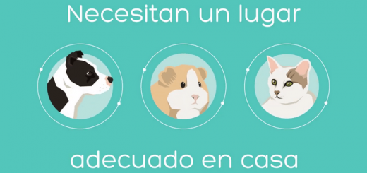 ¿Estáis preparados para tener una mascota?