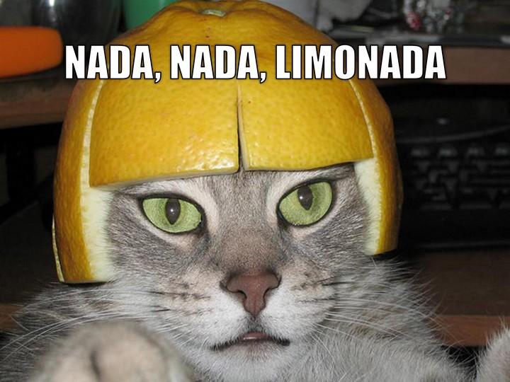 Miáucoles: Nada, nada, limonada