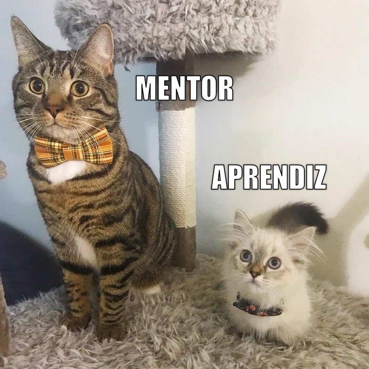 Miáucoles: Mentor, aprendiz