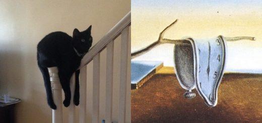 La persistencia del gato