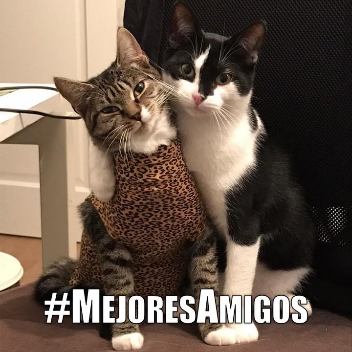 Miáucoles: #MejoresAmigos