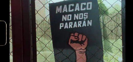 Macaco - No nos pararán