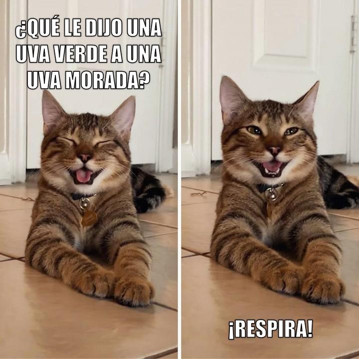 Miáucoles: Gato Cómico: ¿Qué le dijo una uva verde a una uva morada?